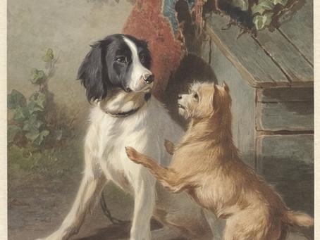 De hond van de dokter van Dudzele