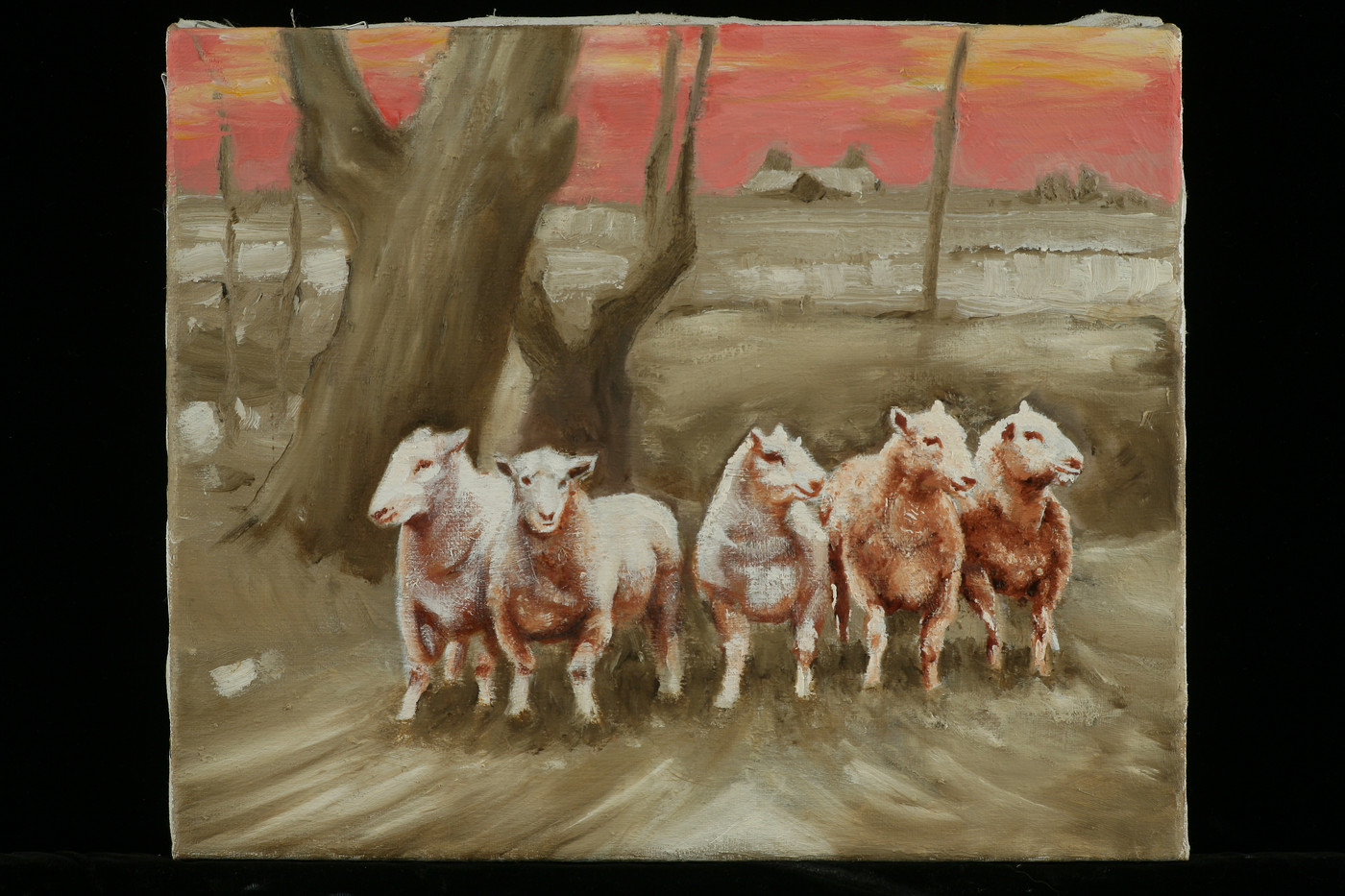 The Five Sheep