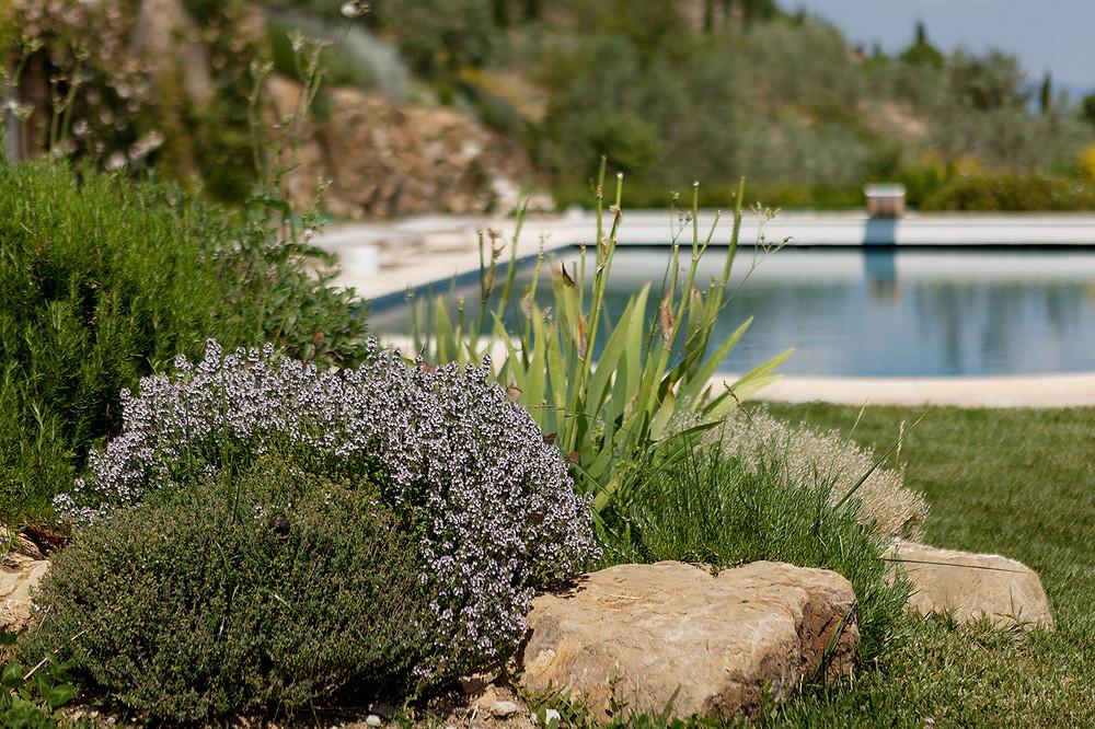 Pool at Casalone