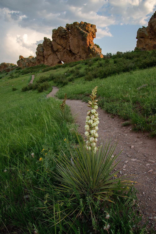 Yucca Devils Backbone Colorado