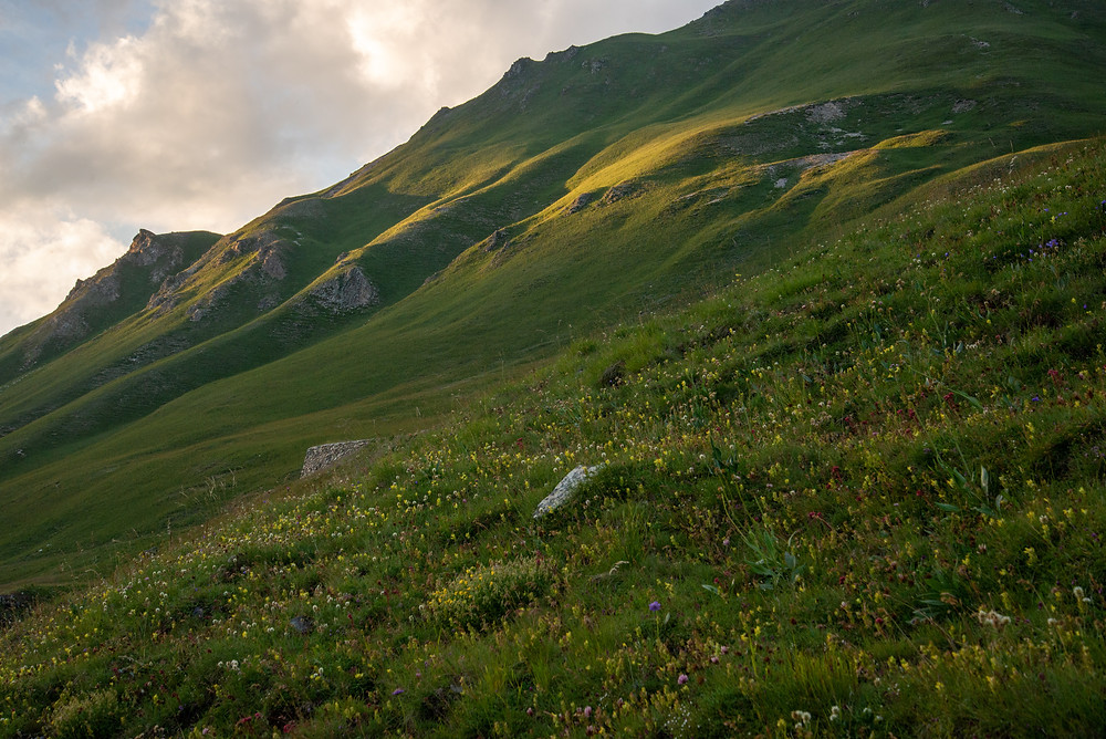 Green meadows in the Alps of France.