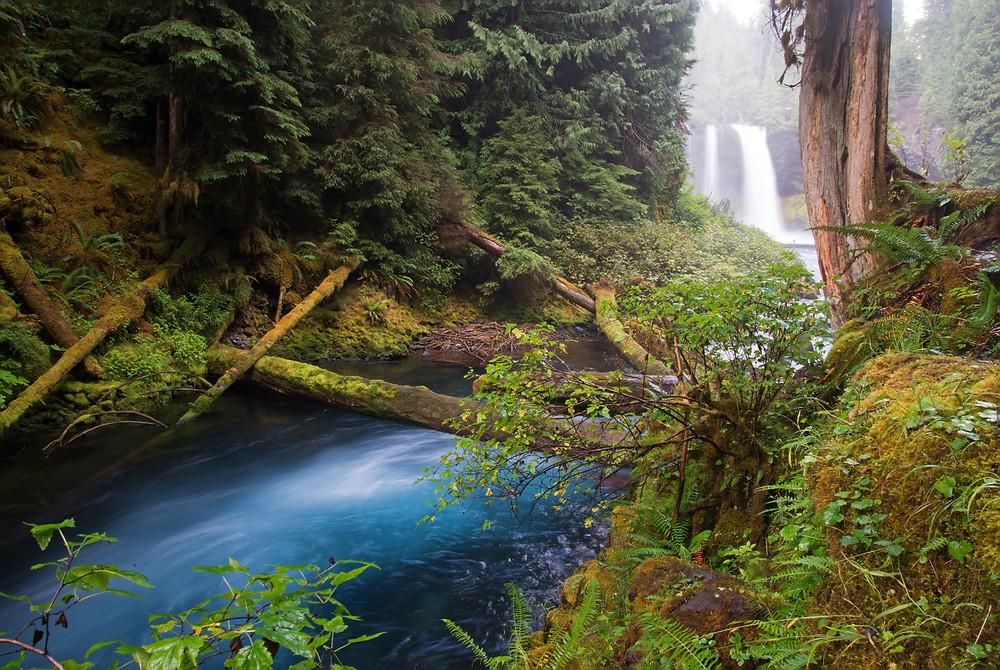 Koosh Falls and the McKenzie River in Oregon.