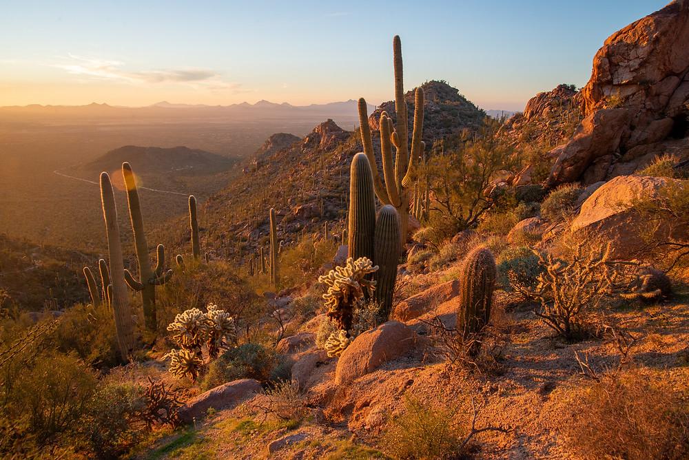Sonoran desert in Saguaro National Park in Arizona.