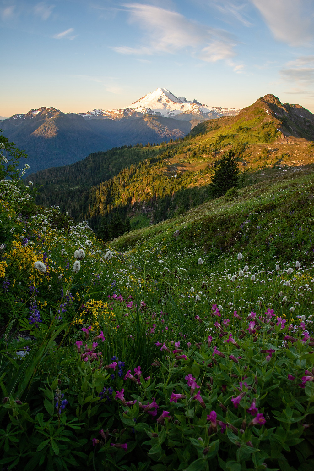 Wildflowers cover the slopes beneath Mount Baker in the Mount Baker Wilderness in Washington.