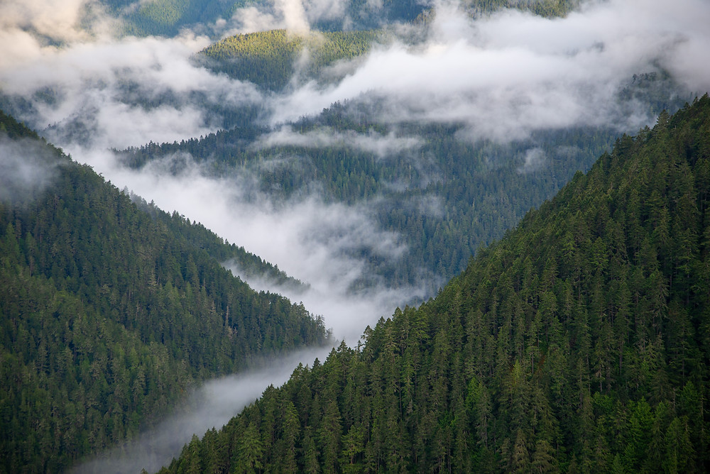 A misty forested valley in Olympic National Park in Washington.