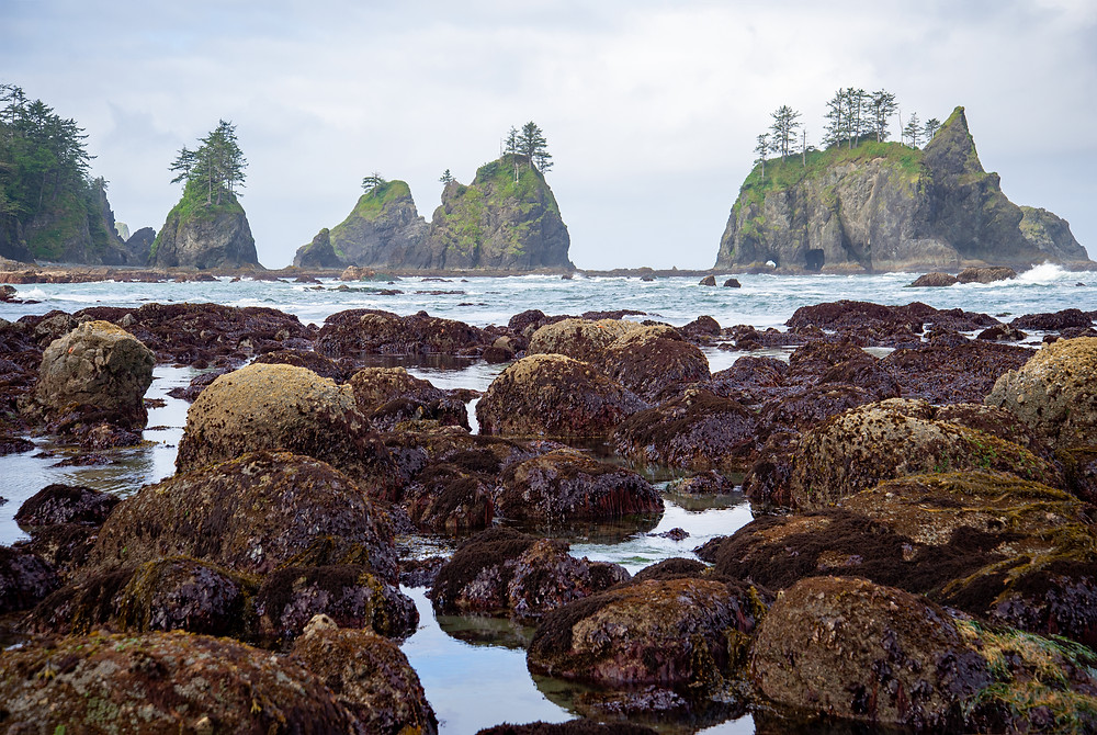 Sea stacks in Olympic National Park in Washington.