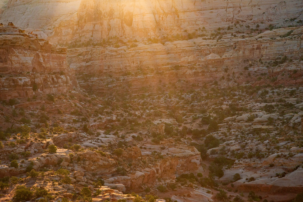 A close up of a canyon at sunrise in Capitol Reef National Park in Utah.