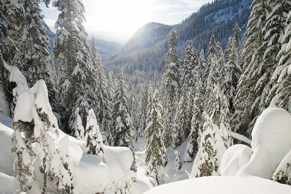 Fresh snow blankets the forest near Snoqualmie Pass in Washington.