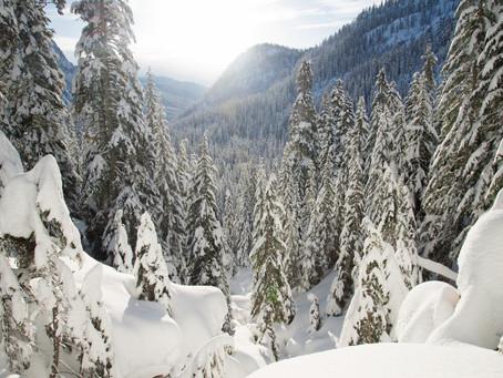 Gallery: Winter Wonderland