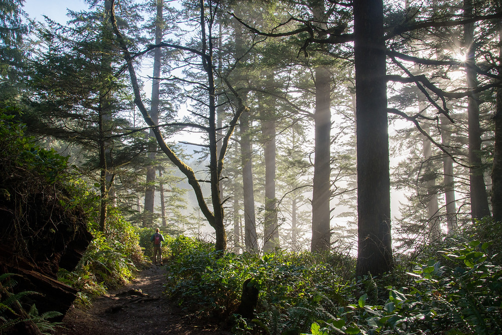 A hiker in a misty coastal forest in Oswald West State Park in Oregon.