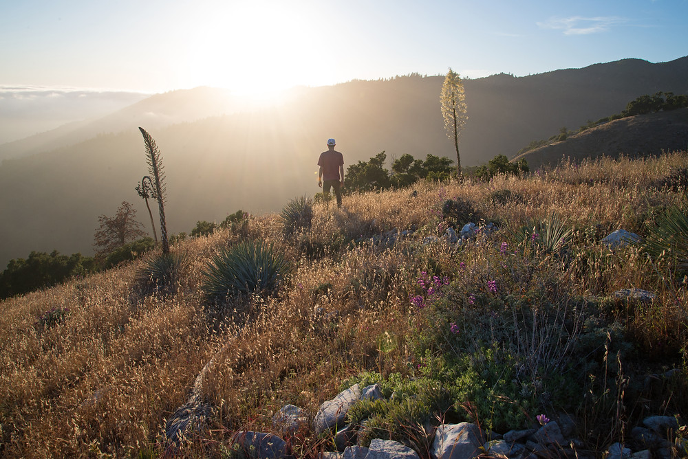 A hiker at sunset among blooming yucca and lupine in the Ventana Wilderness near Big Sur, California.