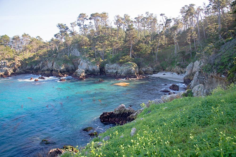Spring at Point Lobos in California.