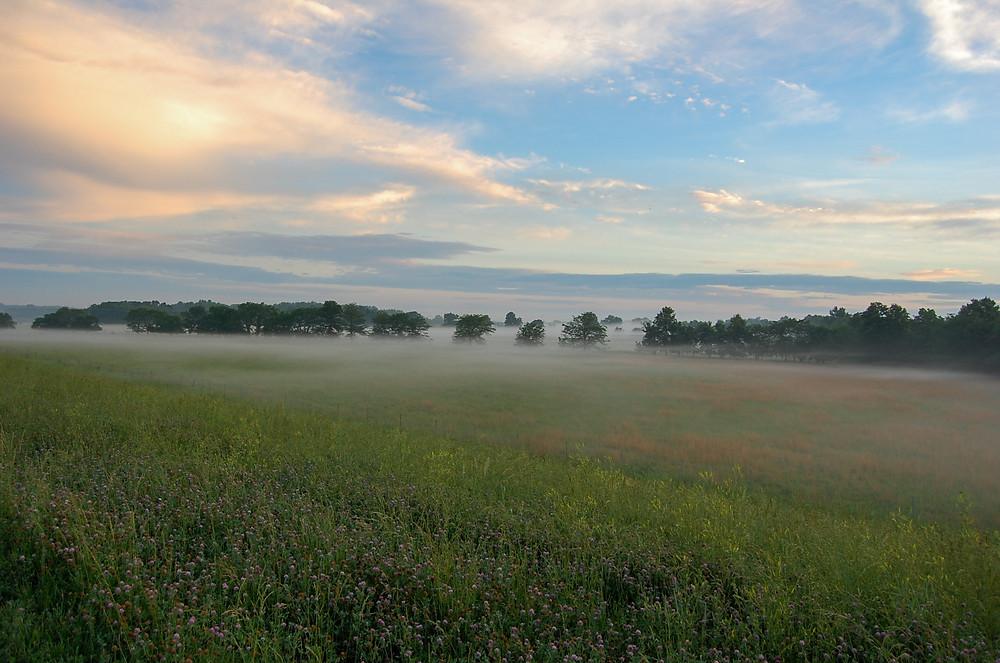 Sunrise over blooming prairie grasses in eastern Kansas.