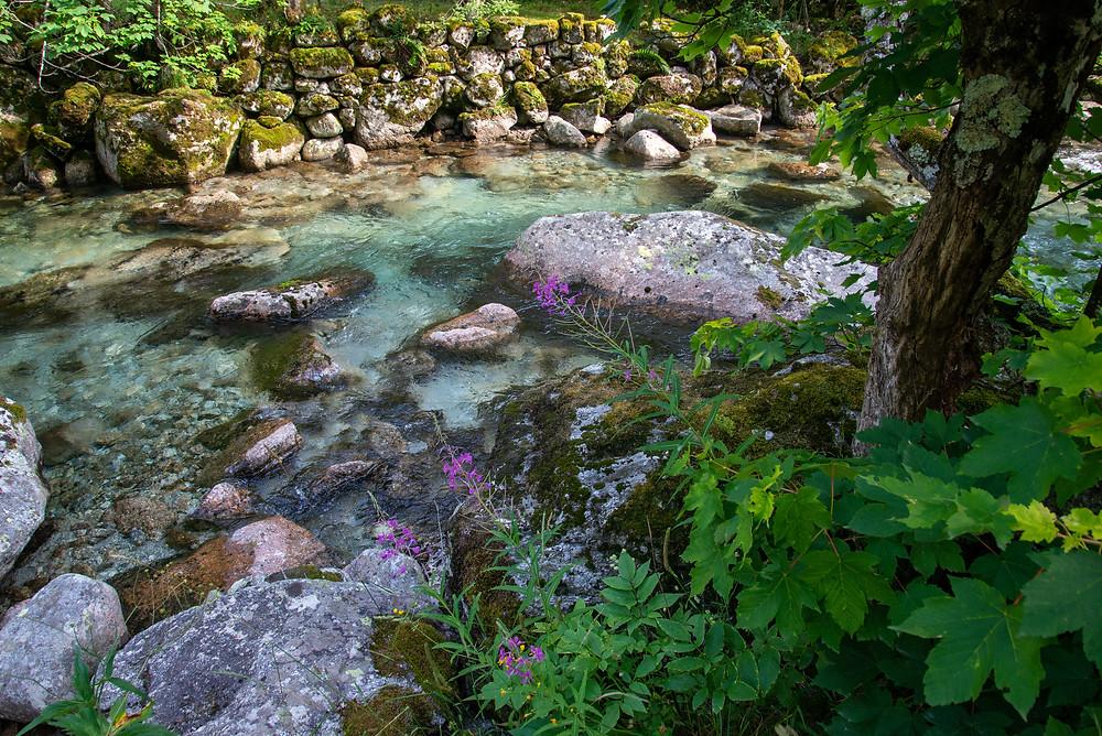 Wildflowers along a stream in Val di Mello, Italy.