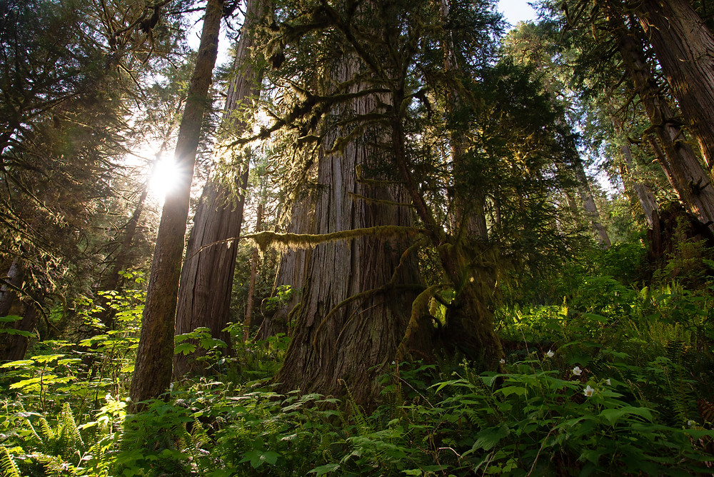 Old growth forest in spring in North Cascades National Park in Washington.