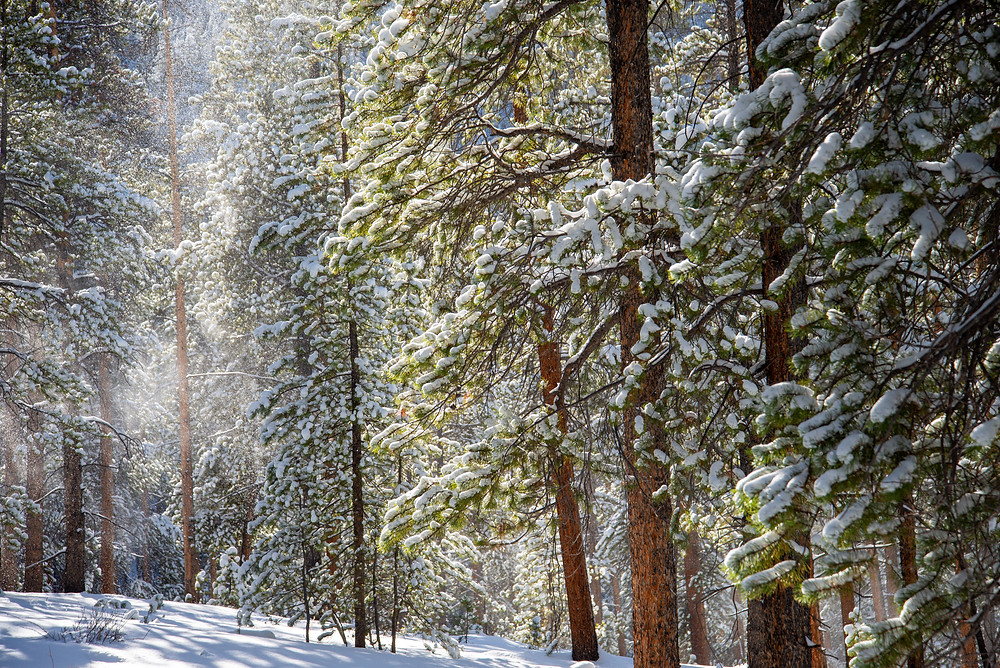 A fresh dusting of snow covers the forest near Crested Butte, Colorado.
