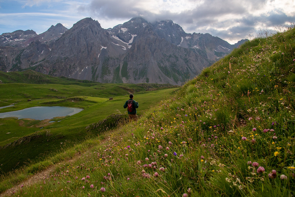 A hiker in a wildflower meadow in the Alps of France.
