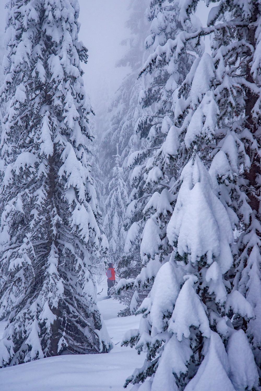 Hiking through a snowy forest on Mount Spokane in Washington.