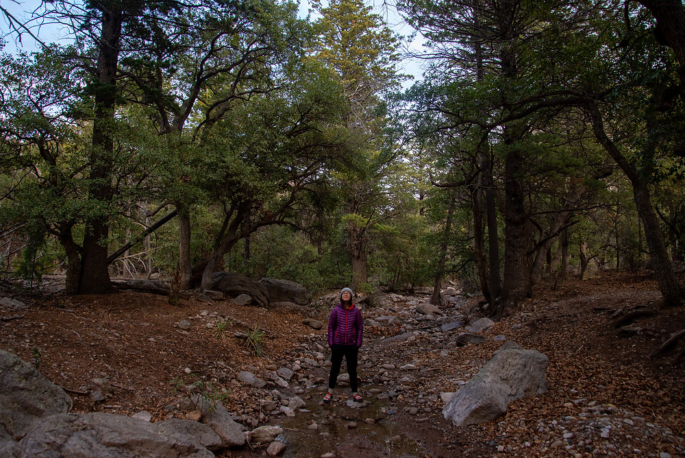 A hiker stands in an oak pine forest in the Chiricahua Mountains in Arizona.