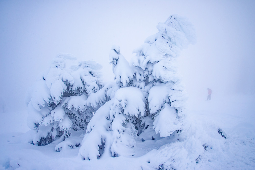 A snow ghost sits in heavy fog on the slopes of Mount Spokane in Washington.