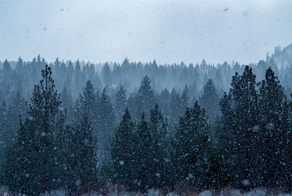 Heavy snow falls near Mammoth Lakes, California.