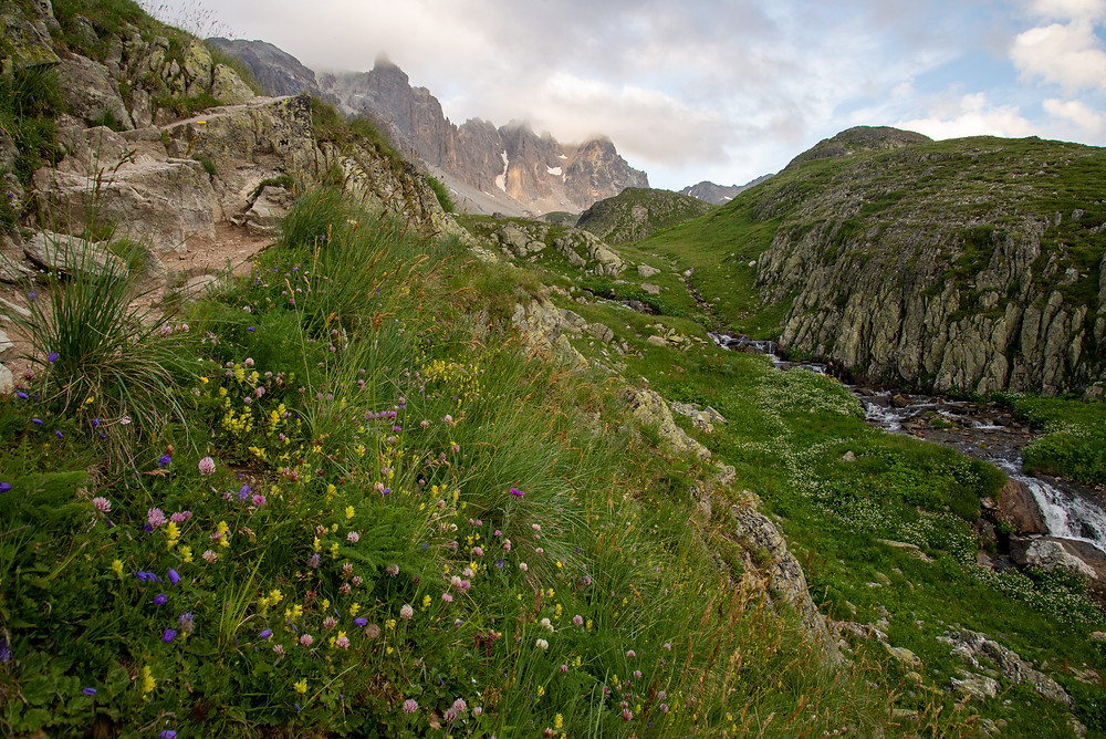 Wildflowers in an alpine environment in the Alps of France.