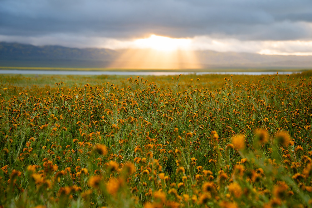 Sun breaks through the clouds during a spring superbloom at Carrizo Plains National Monument in California.