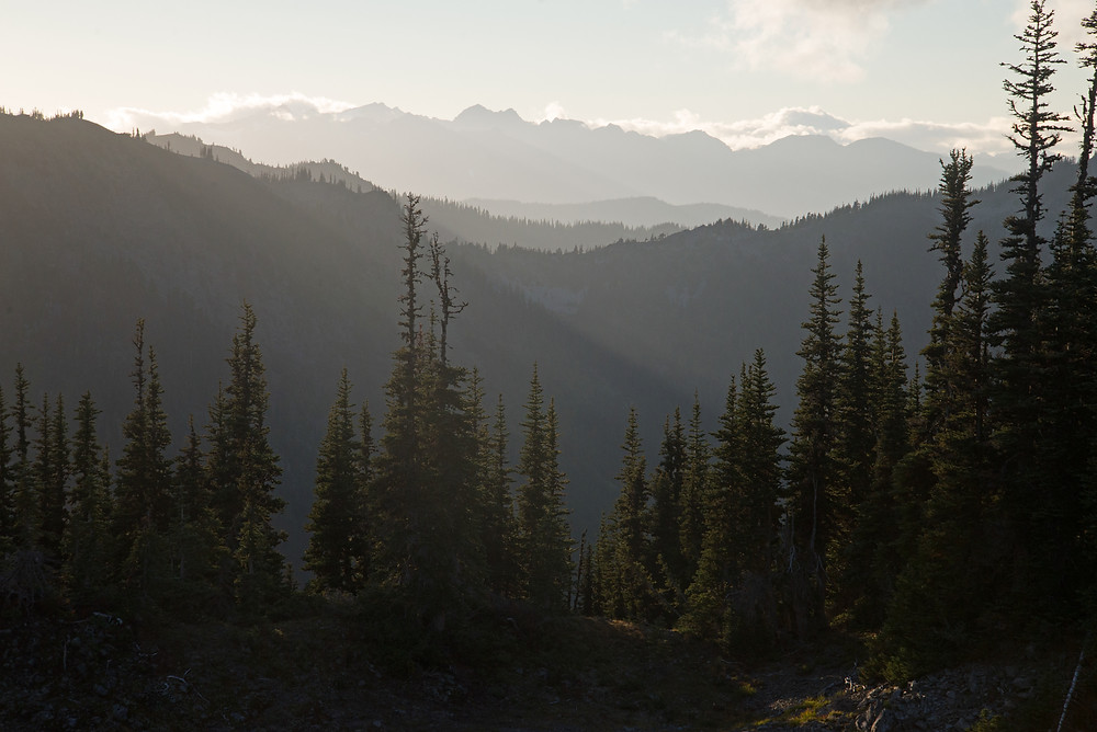 High forested ridge in Olympic National Park in Washington.