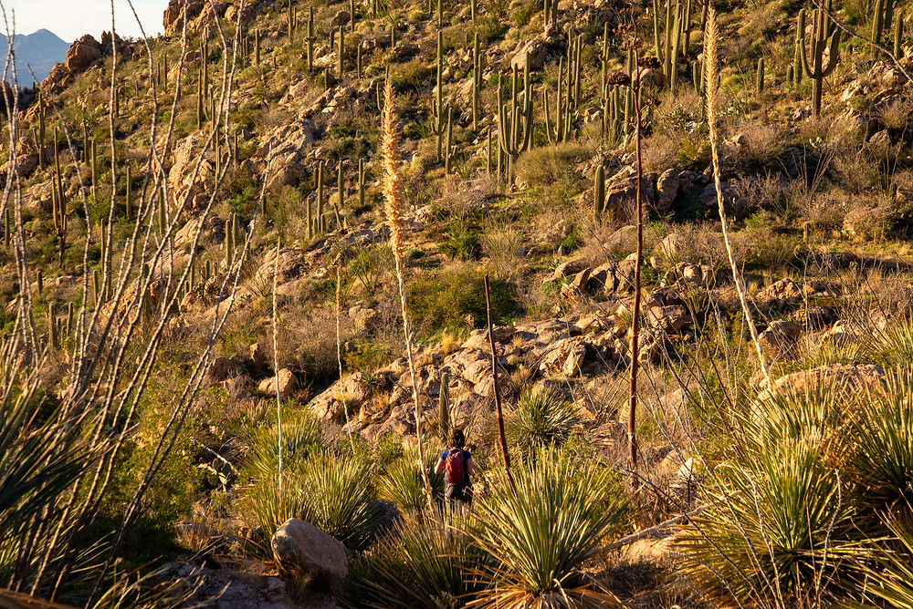 Romero Canyon Trail Arizona