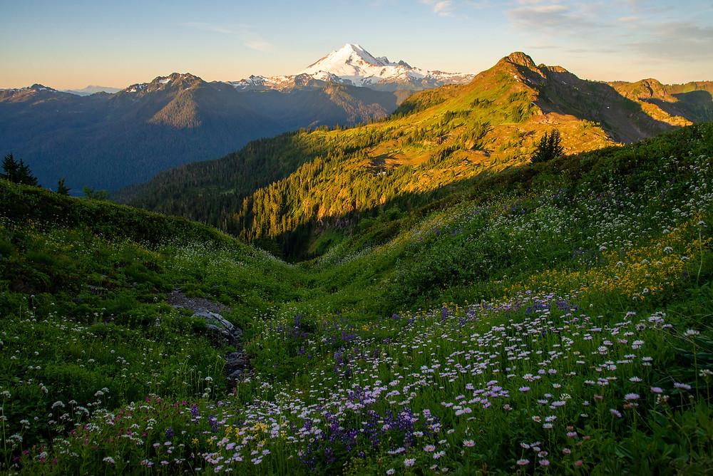 Wildflower filled slopes beneath Mount Baker in the Mount Baker Wilderness in Washington at sunrise.