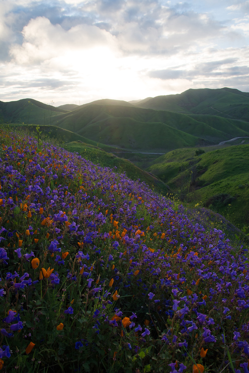 A spring superbloom occurs in the Chino Hills in southern California.