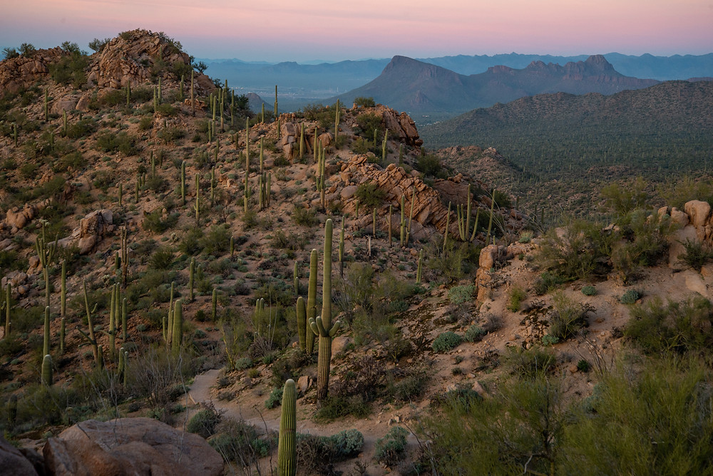 Sunset in Saguaro National Park in Arizona.