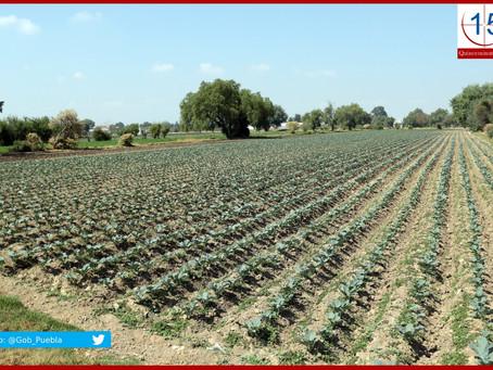 Atiende SDR a productores afectados por granizada en Tecamachalco