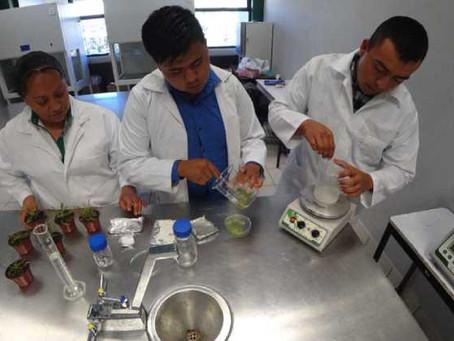 Universitarios UTTECAM crean trampa adherente contra insectos plaga en cultivos