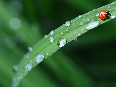 La mejor forma de hidratarse es con agua natural, señala especialista
