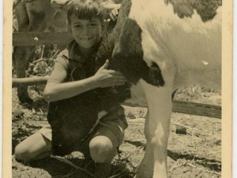 על פרה במושב, והכנה ביתית של מוצרי חלב