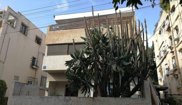 הקקטוס הענק בחצר ביתה של רנה שפירא, רחוב לוי יצחק 9, תל אביב, 2018