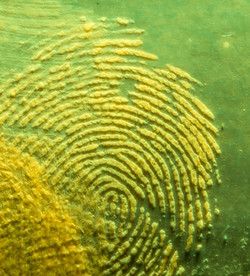 CST - Fingerprint  - Copie
