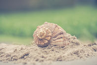 macro-photography-of-shell-on-sand-10134