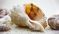 shell-1348742_1920.jpg