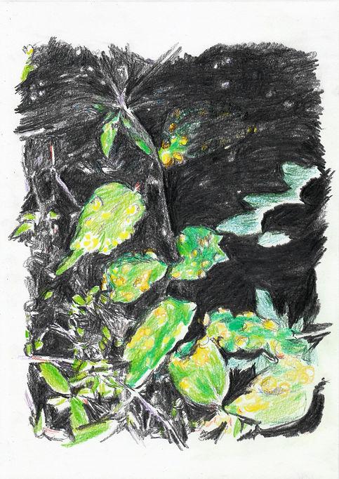 SYMBIOSE . crayons sur papier 20 x 30 - mathieu le breton © 2020