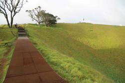 Maungawhau_Mt Eden Tihi Boardwalk - HEB