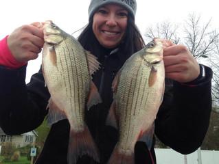 White bass to bluegills part 2