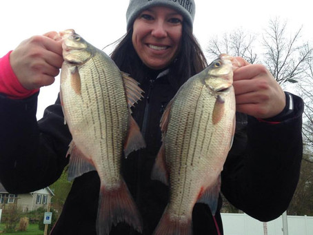 White bass to bluegills part 2