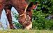 donkey-1268897_1280.webp