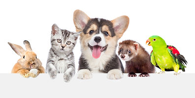 Group of pets together over white banner