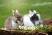 rabbit-2174679__340.webp