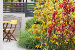 get-eco sustainable garden design