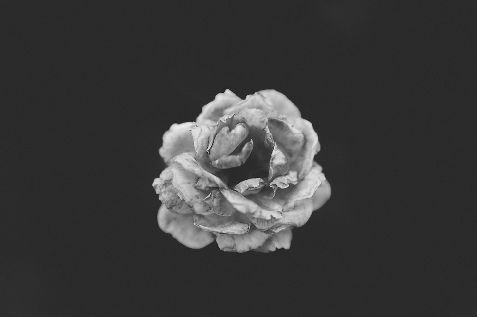 Fleur monochromatique