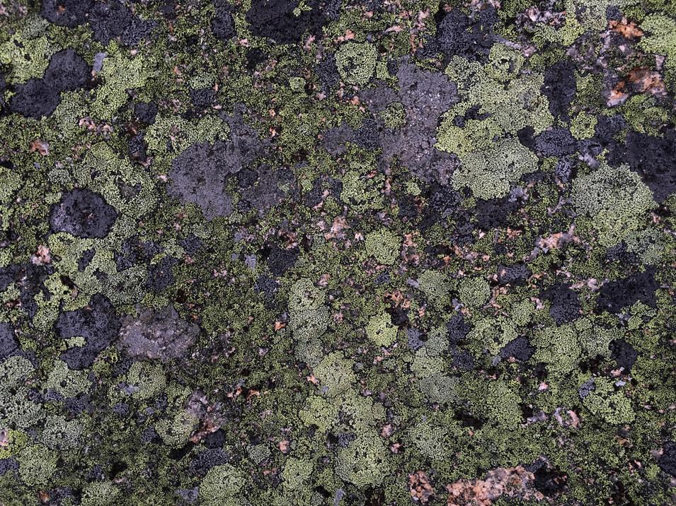Lichen Planet